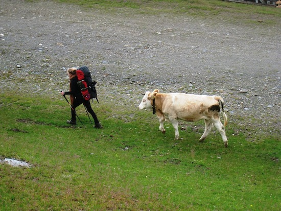 Heiða chased by a cow outside Rif. Polse